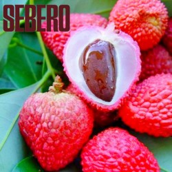 Sebero – Lychee (Себеро...